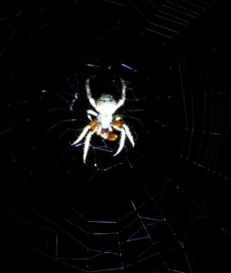 spiderwithprey1