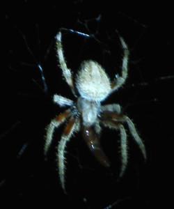 spiderwpreycloseip2