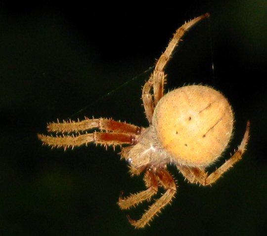 spideroutoftrapclose