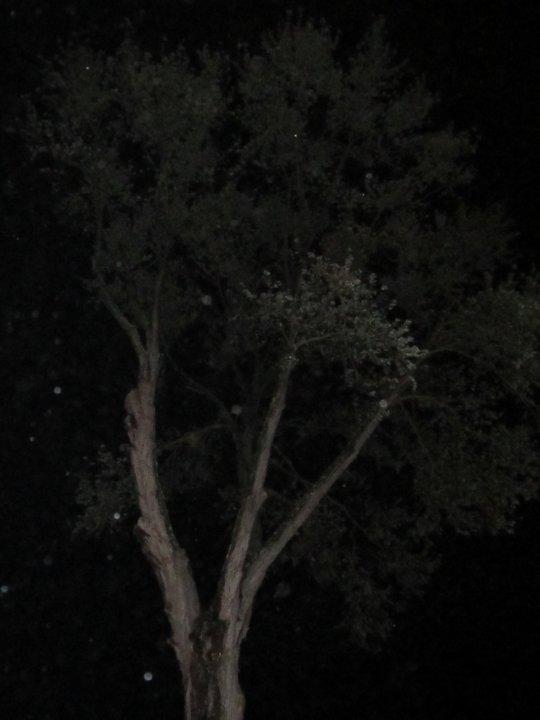100foottree