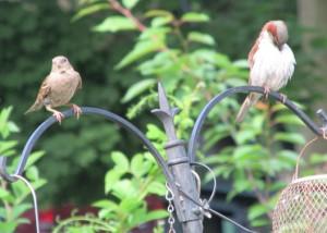 sparrowspreen1