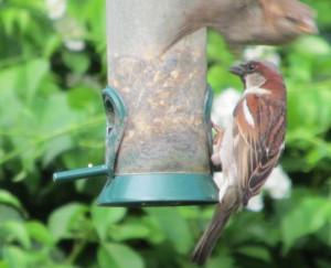 sparrowtakeoff