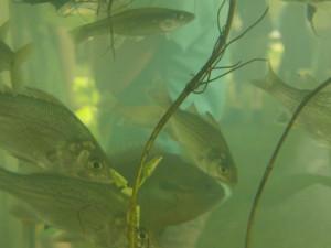 aquatic6