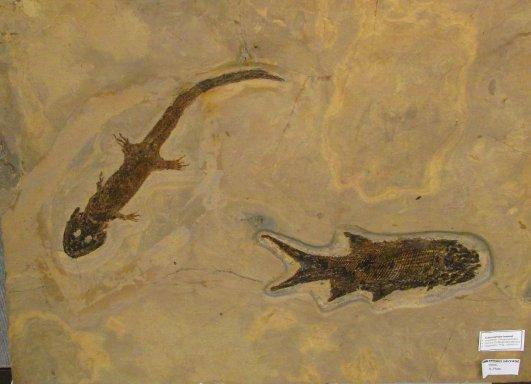 amphibianandfish