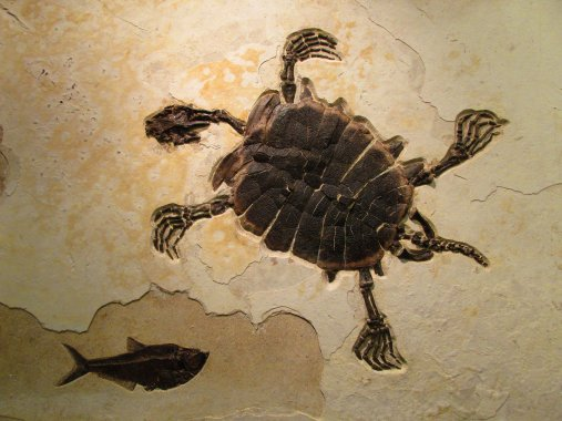 ancientturtleancestor