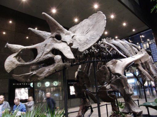 ceratopsian2