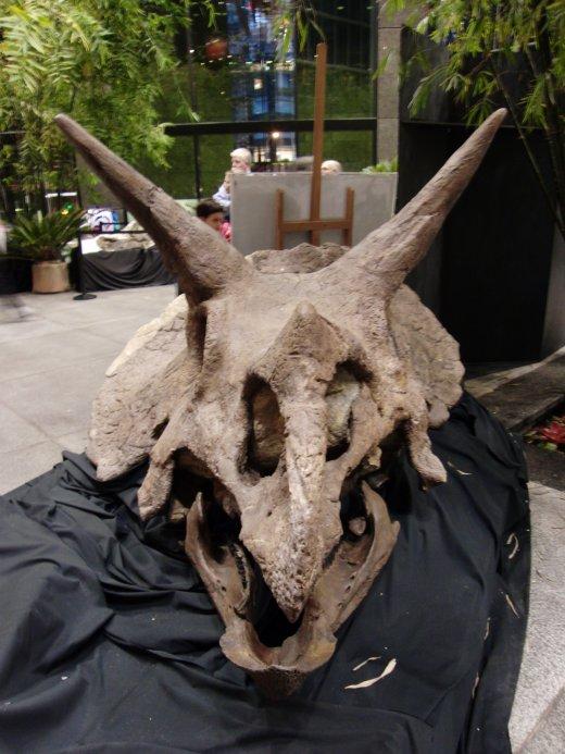 ceratopsian3