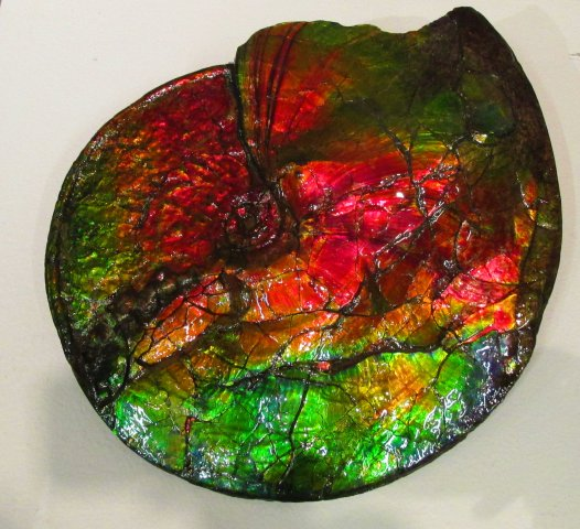 largecolorfulammonite