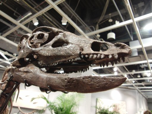 ornithopodskull