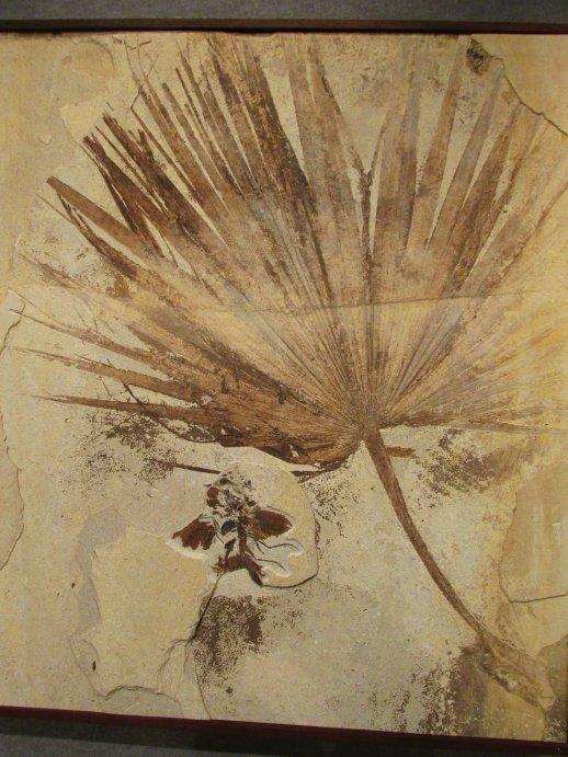 palmfrondandbird