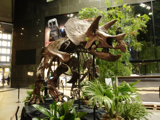 triceratops3