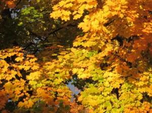 falltrees3