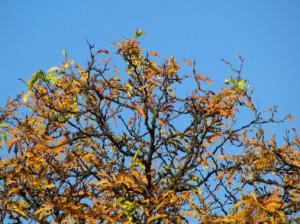 falltrees4