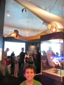 pterosaurs0