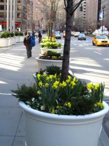 streetplantings