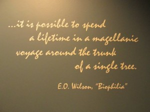 eowilsonquote