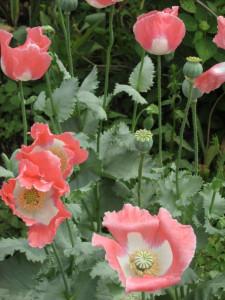flower17