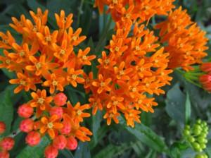flower24