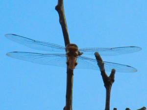 dragonflyatatm