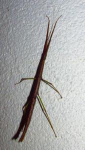 stickug1