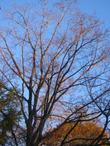 autumntreelitup