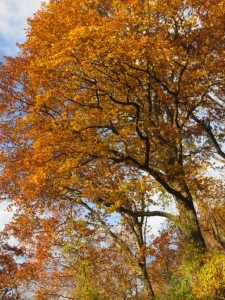 treesbeach1