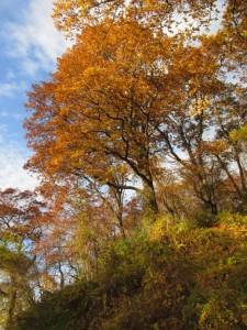 treesbeachhill2