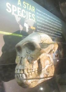 australopithicusafarensis