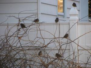 birdsawaitingfeederfill