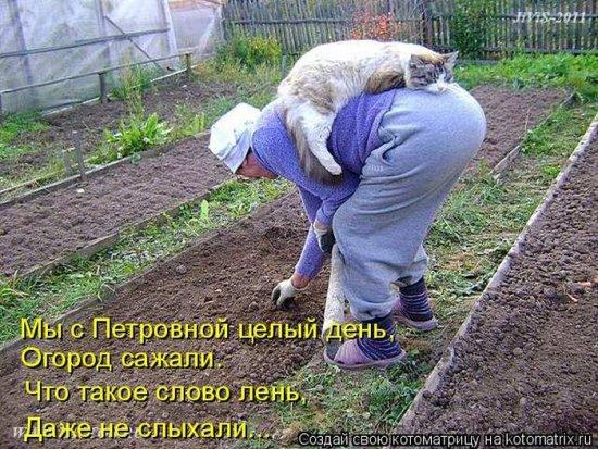 Огород юмор