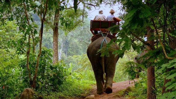 слон джунгли