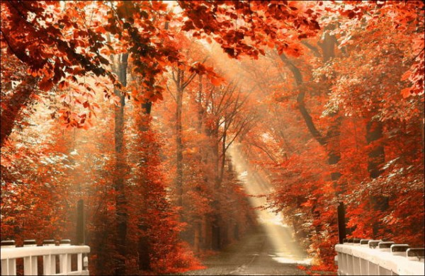 magnificent_autumn_colours_in_full_bloom_640_44