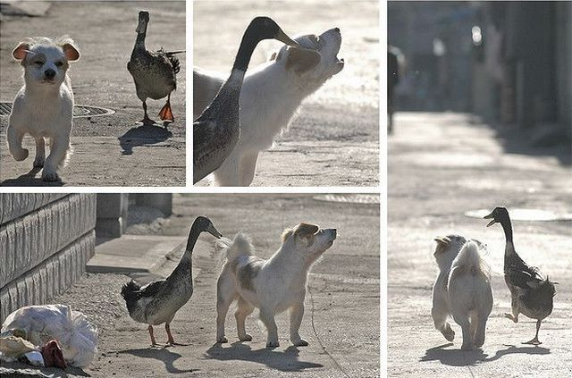 these_funny_animals_1121_640_01