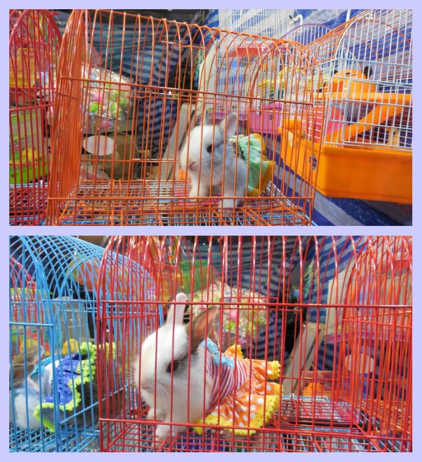 вторые кролики