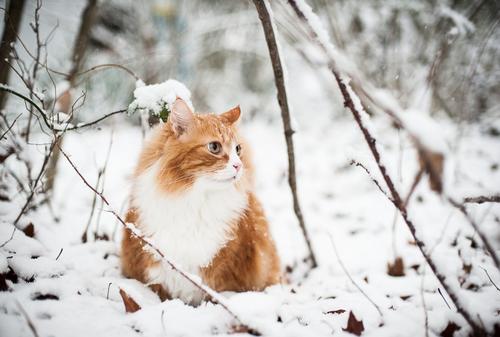 snow tabby 2
