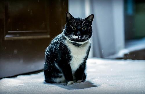 snow cat 1