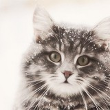 snow kitty 5