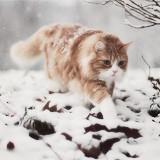 snow kitty 6