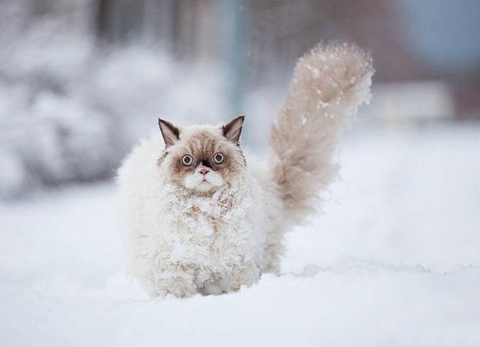 cat in snow 1