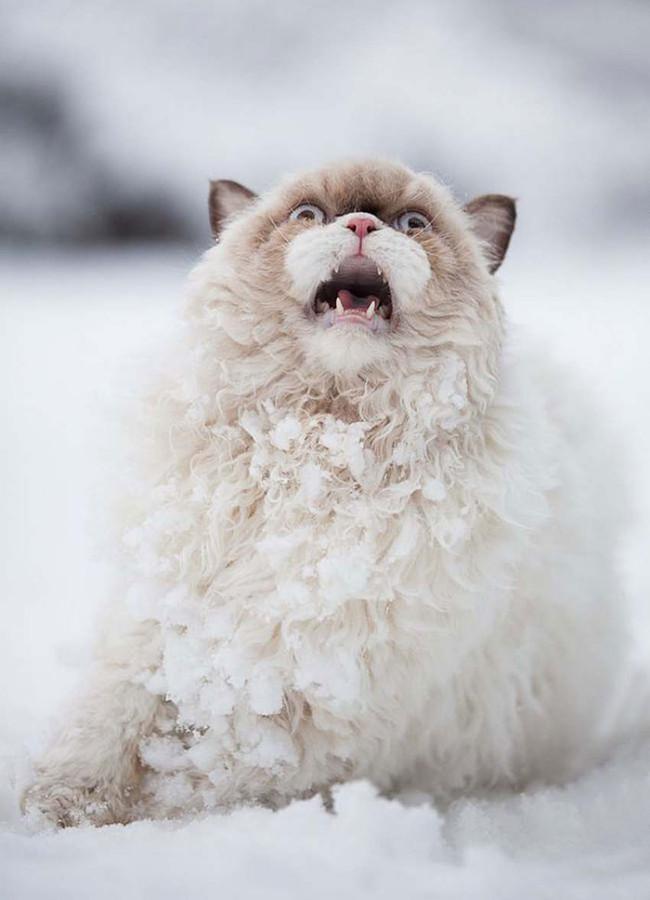 cat in snow 3