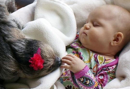 sloth babysitter