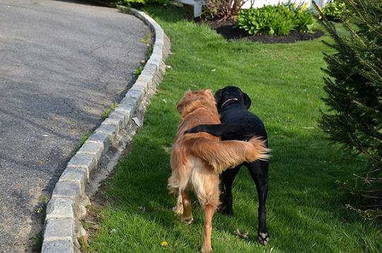 dog pals 09