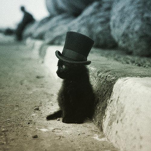 topper cat