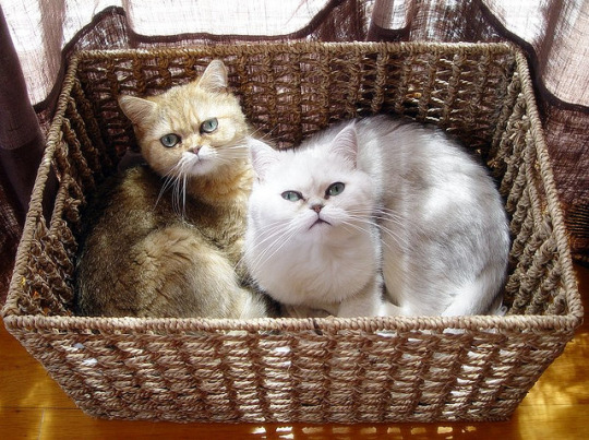annoyed basket