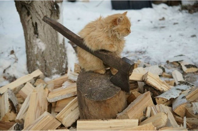 cat with axe