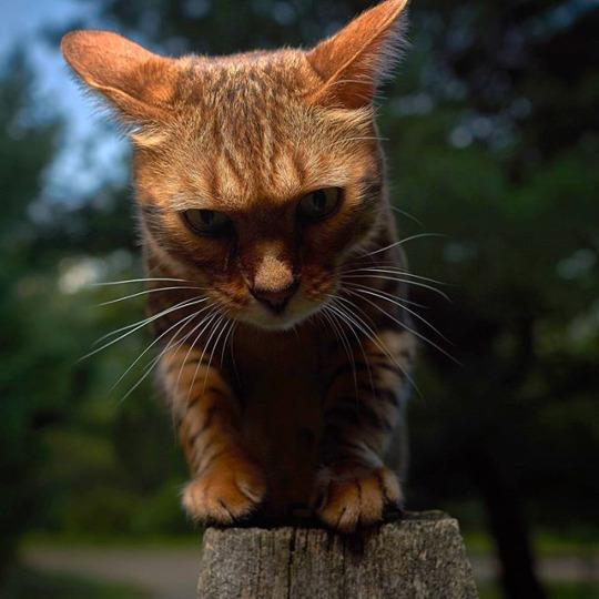 glare kitteh