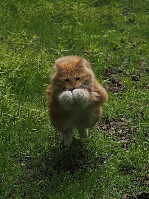 got it cat