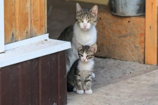 cat lil cat