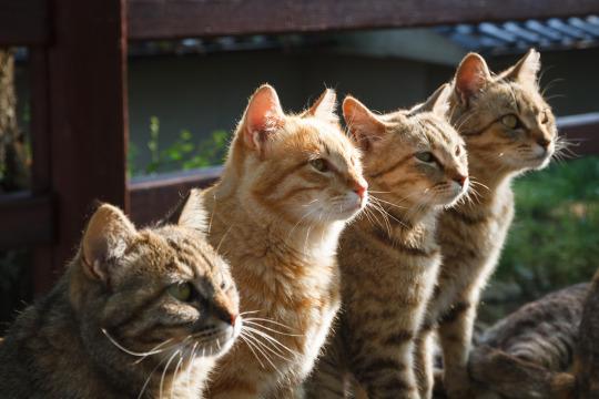 cat lineup