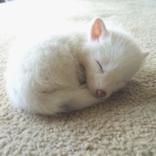 fox babbeh 5